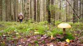 На маслихат ЗКО подали в суд за платные грибы и ягоды в лесах
