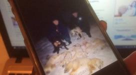 Фото убитых животных в Павлодаре возмутило пользователей соцсетей