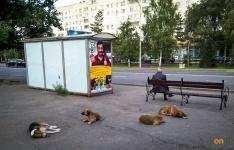 В Павлодаре впервые стерилизуют животных за счет бюджетных средств