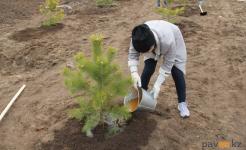 Высадить деревья в память о погибших в годы ВОВ солдатах предлагают павлодарцам
