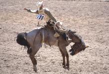Пьяный жокей упал с лошади в Павлодарской области