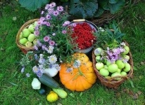 В Павлодаре выберут лучшего садовода-любителя