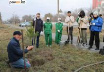 Эколог-общественник Юрий Гашек провел мастер-класс для жасылелевцев по посадке деревьев