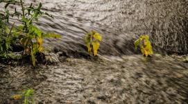 В ряде районов Павлодара планируют установить дренажную канализацию