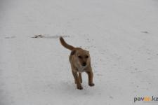 Четыре с половиной тысячи бездомных животных отловили в прошлом году в Павлодаре