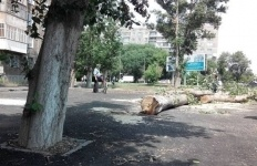 В отделе ЖКХ объяснили, зачем срубили деревья в парке возле КДЦ «Шанырак» и на Суворова, 7/1