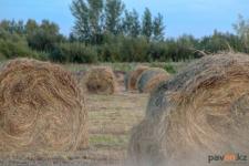 Житель Павлодарской области может лишиться свободы за то, что скосил сено на чужом участке и продал его