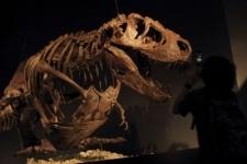В Нью-Йорке на аукционе выставят древнейший скелет динозавра