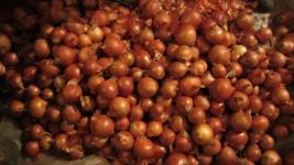 СПК продает лук по 20 тенге за килограмм