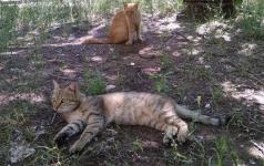 Куда девать бродячих кошек?