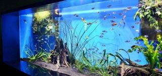В Павлодаре появится контактный аквариум