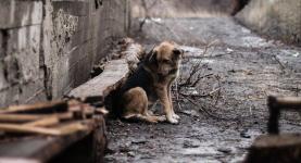 Дачных живодеров разыскивают волонтеры в Павлодаре