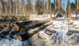 """В Лебяжинском районе поймали """"чёрных лесорубов"""""""