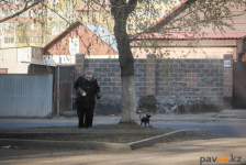 Полицейские разъяснили, как выгуливать домашних животных в условиях карантина