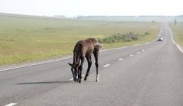 В Прииртышье в результате столкновения с лошадью пострадали три человека