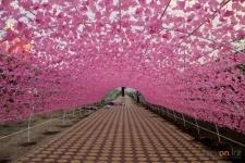 В Павлодаре хотят отремонтировать цветочную арку на проспекте Тәуелсіздік