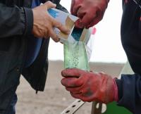 Семена свеклы из Германии засеяли в Павлодарской области