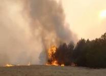 В сосновом бору Щербактинского района продолжают тушить крупный пожар