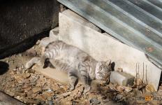 Тайной назвали в УСХ Павлодарской области суммы, выделяемые из бюджета на умерщвление бездомных животных