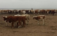 В пяти пригородных селах Павлодара появятся ветеринарные пункты