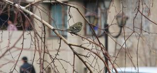 Птицы – лучший индикатор экологии