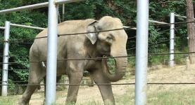 В Таиланде слон заколол мужчину и унес семью туристов в джунгли