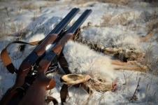 Жителя Прииртышья задержали за незаконную охоту на зайцев