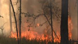 Гроза стала причиной шести лесных пожаров за сутки в Павлодарской области