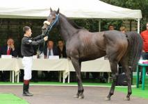 48 миллионов тенге вложили в проект развития конного спорта в Павлодарском районе