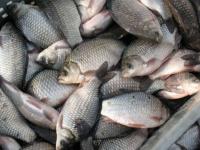 Из-за нереста запрещена рыбалка, но водноспасатели ежедневно возвращаются с берегов Усолки с богатым уловом