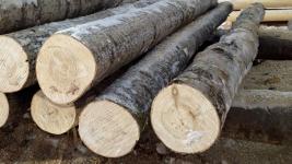 Сельчанина в Павлодарской области оштрафовали и конфисковали у него бензопилу с телегой за незаконную порубку деревьев