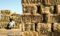 Двухгодичный запас сена планируют заготовить агрохозяйства