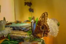 Выставка бабочек (много фото)