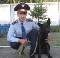Служебная собака нашла подозреваемую в краже денег в Павлодарской области