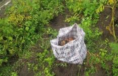 Павлодарские полицейские задержали дачных воров
