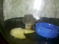 Мышь и что с ней делать?
