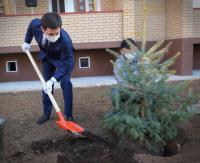 Аким Павлодарской области вместе с новоселами в Экибастузе высаживал елки