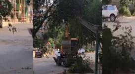 В Актау деревья ломают экскаватором