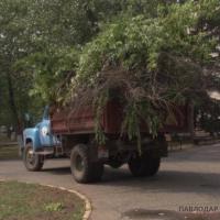 В отделе ЖКХ определили подрядчиков по обрезке деревьев и высадке цветов