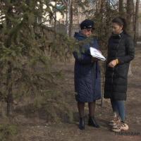 Павлодарский биолог высказалась о причинах травм на деревьях