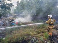 За минувшие выходные в Прииртышье произошло 49 возгораний тополиного пуха