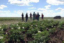 Жители села Павлодарского готовятся пустить под нож весь домашний скот, пасти который стало негде
