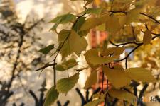 Пасмурную и ветреную погоду в Павлодаре прогнозируют на выходные синоптики