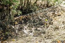 Житель Павлодарского района заплатит более 50 тысяч тенге за рыбалку с лесковой сетью
