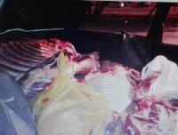 Жителей Павлодарской области наказывают за перевозку скота и туш животных без документов