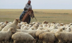 Безработные сельчане в Павлодарской области не хотят быть пастухами за 100 тысяч тенге с предоставлением жилья и питания