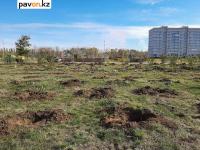 Четыре тысячи деревьев из обещанных двадцати тысяч высадили в Павлодаре