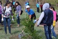 70 новых деревьев посадили в Павлодаре ко Дню Победы