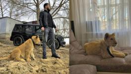 Павлодарского львенка Симбу забрали у владельца и передали в зоопарк