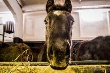 Ветеринары просят жителей города регистрировать своих сельскохозяйственных животных